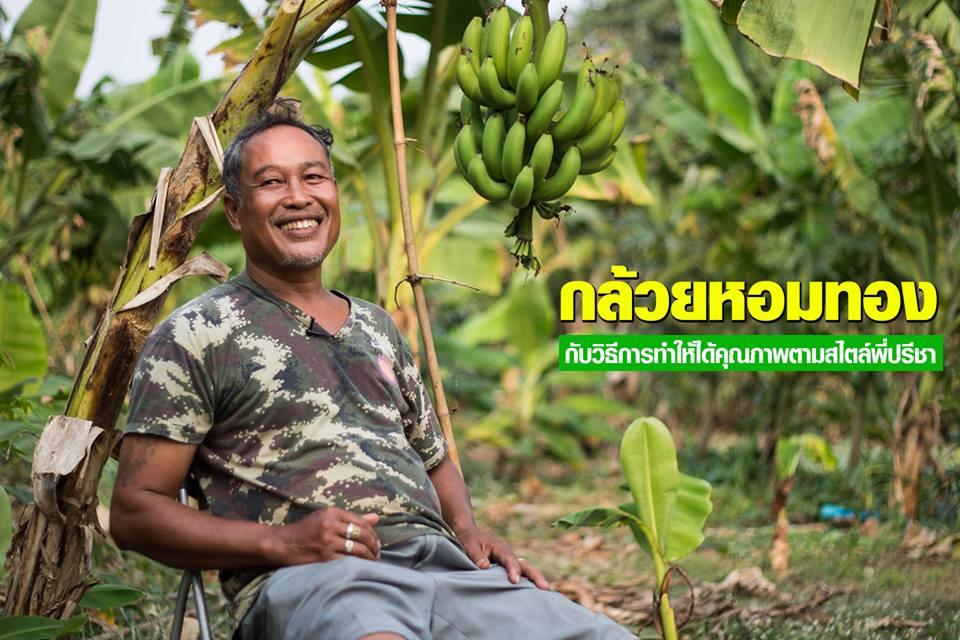 กล้วยหอมทอง พี่ปรีชา รสชาติดี…มีคุณภาพ