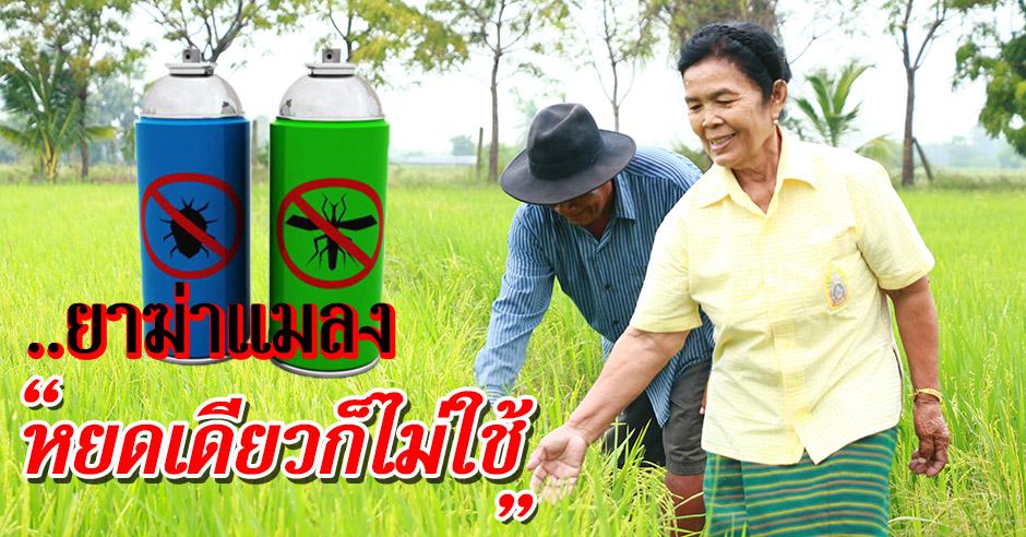 """""""ปลูกข้าวไม่ใช้ยาฆ่าแมลง?"""" เรื่องจริงจากชาวนาไทย"""